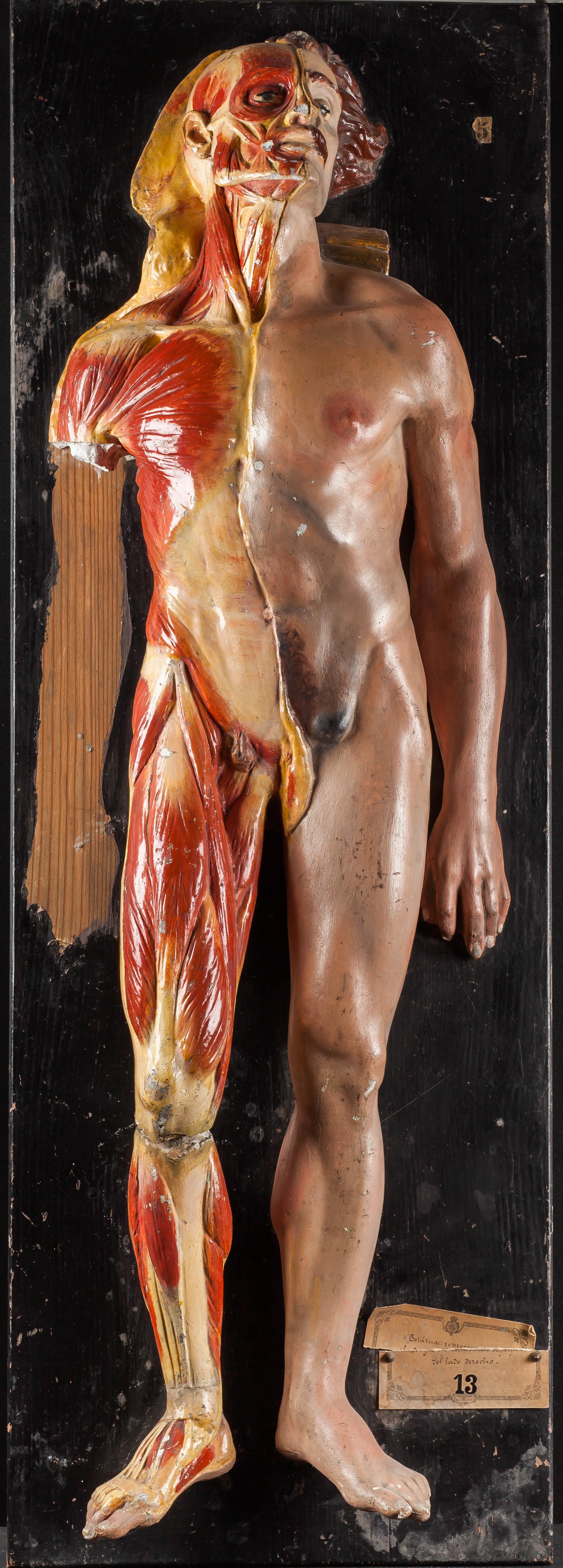 IES_SANISIDRO_MUSEO_Fisiologia_008
