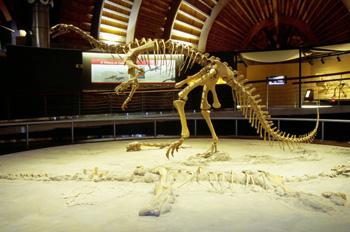Plateosaurus (Prosaurópodo), Museo del Jurásico de Asturias, Col