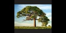 PRIMARIA - 2º - TREES - CIENCIAS DE LA NATURALEZA - FORMACIÓN