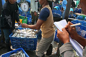 Pesando el pescado, Jakarta