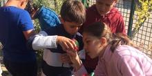 2019_06_11_4º observa insectos en el huerto_CEIP FDLR_Las Rozas 7