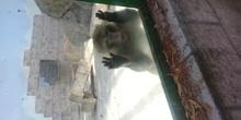 Mono enfadado