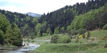 Bosque de Irati. Cauce del río