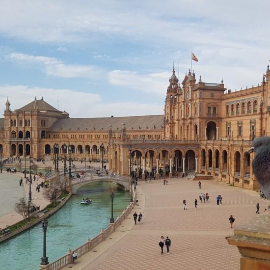 Paloma posada (Sevilla).