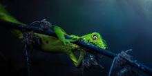 Sony World Photography Awards 2017 4