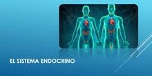 La función de relación: Aparato endocrino