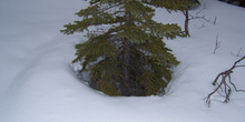 Nieve, Lago Louise, Parque Nacional Banff
