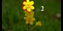 La naturaleza y la geometría (Flor polig 1 ESO)