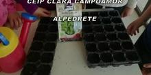 the great plant hunt Clara Campoamor