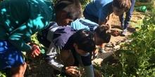 2019_06_11_4º observa insectos en el huerto_CEIP FDLR_Las Rozas 24