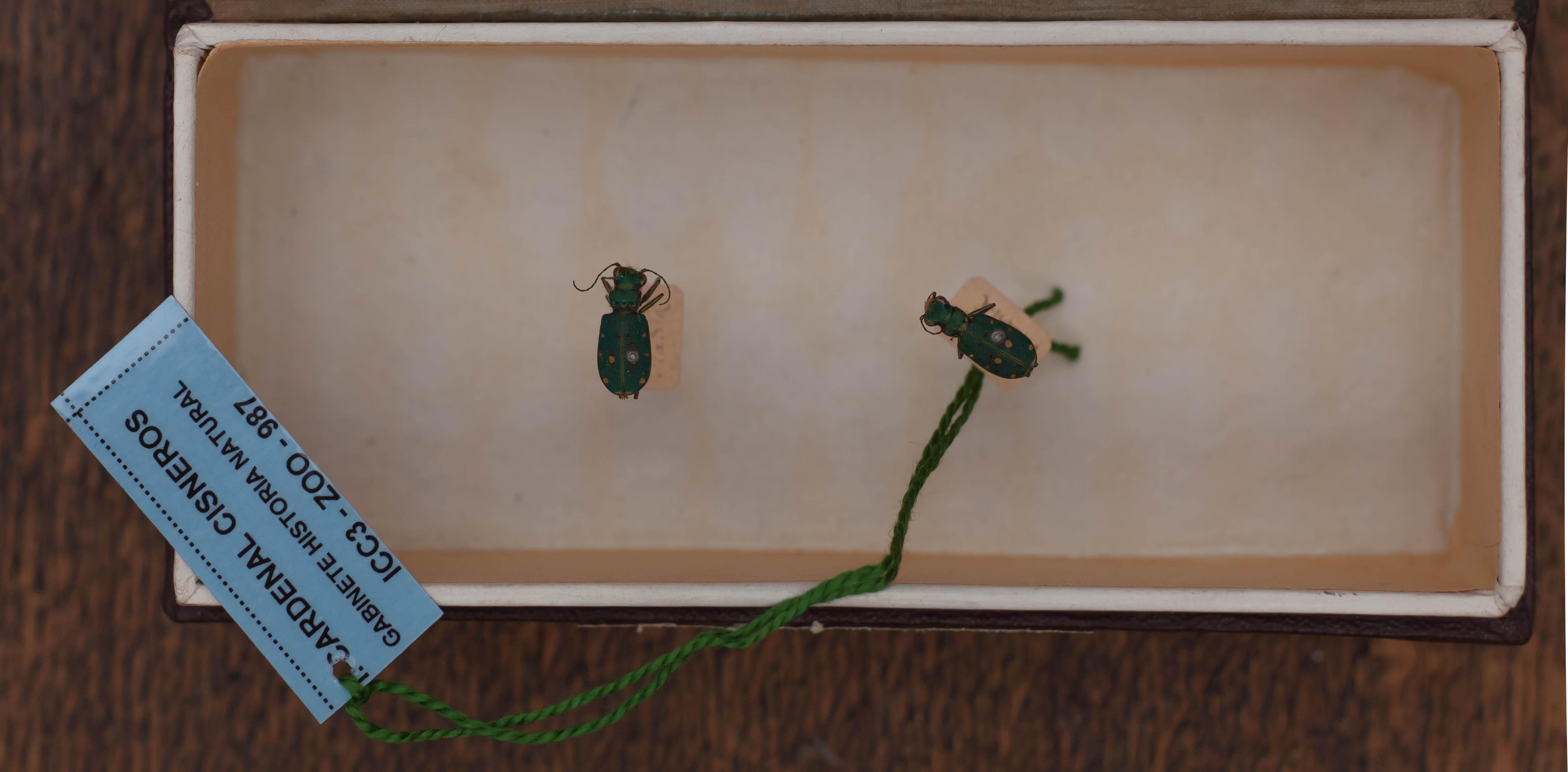IES_CARDENALCISNEROS_Insectos_012