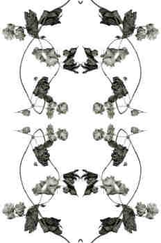 Simetría de la rama de lúpulo en tonos grisáceos