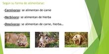 los animales vertebrados. Interactivo