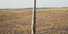 árbol bosquimano en el Kalahari, Namibia