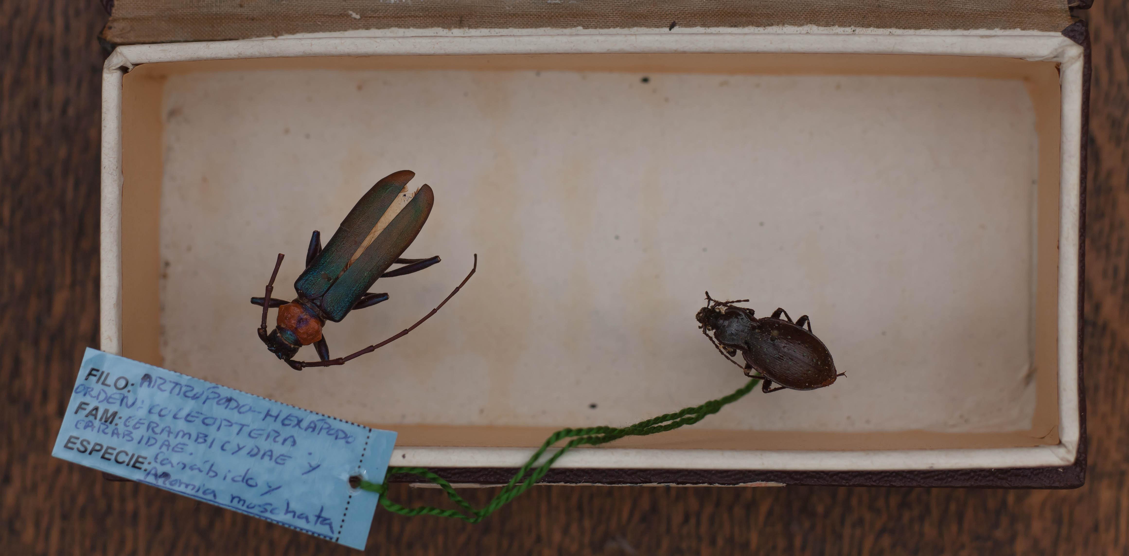 IES_CARDENALCISNEROS_Insectos_010