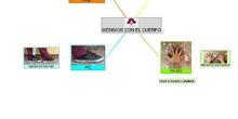 PRIMARIA 1º - MATEMÁTICAS - MEDIMOS  ON EL CUERPO