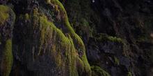 Vegetación en lugares húmedos, Monasterio de Piedra, Nuévalos, Z