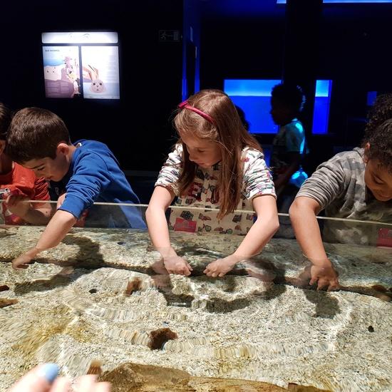 Fotos Aquarium Xanadú 3ºB 9