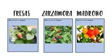 arbustos y frutos silvestres