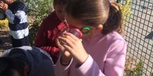 2019_06_11_4º observa insectos en el huerto_CEIP FDLR_Las Rozas 2