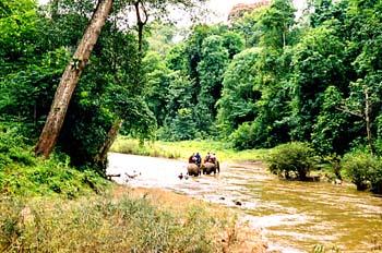 Elefantes cruzando río, Chiang Mai, Tailandia