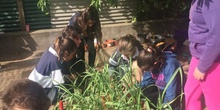 2019_05_Los alumnos de 4º en el Huerto_CEIP FDLR_Las Rozas 37