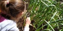 2019_06_07_Los alumnos de Quinto observan los insectos del huerto_CEIP FDLR_Las Rozas 16