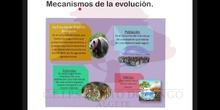 SECUNDARIA 4ºBIOLOGÍA Y GEOLOGÍAMECANISMOS DE LA EVOLUCIÓN