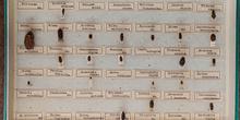 IES_CARDENALCISNEROS_Insectos_013