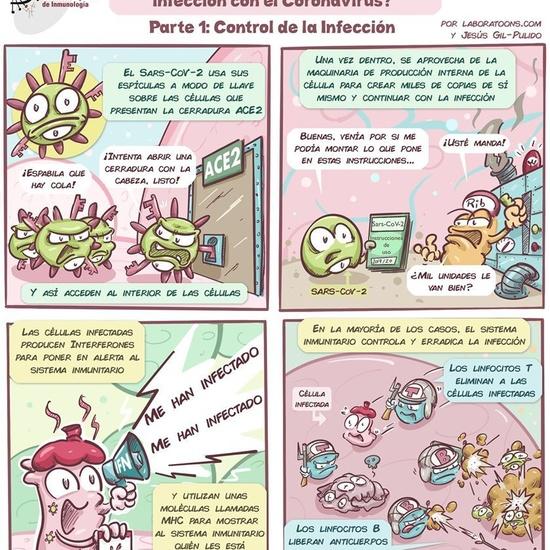 Cómic: ¿Qué pasa con tus defensas durante la infección con COVID-19? 2