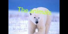 PRIMARIA - TERCERO - INTERACTION OF ANIMALS - NATURAL SCIENCE -GABI, LAYRA, JACOB, LUCÍA - FORMACIÓN