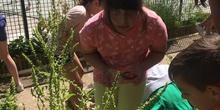 2019_06_11_4º observa insectos en el huerto_1_CEIP FDLR_Las Rozas 10