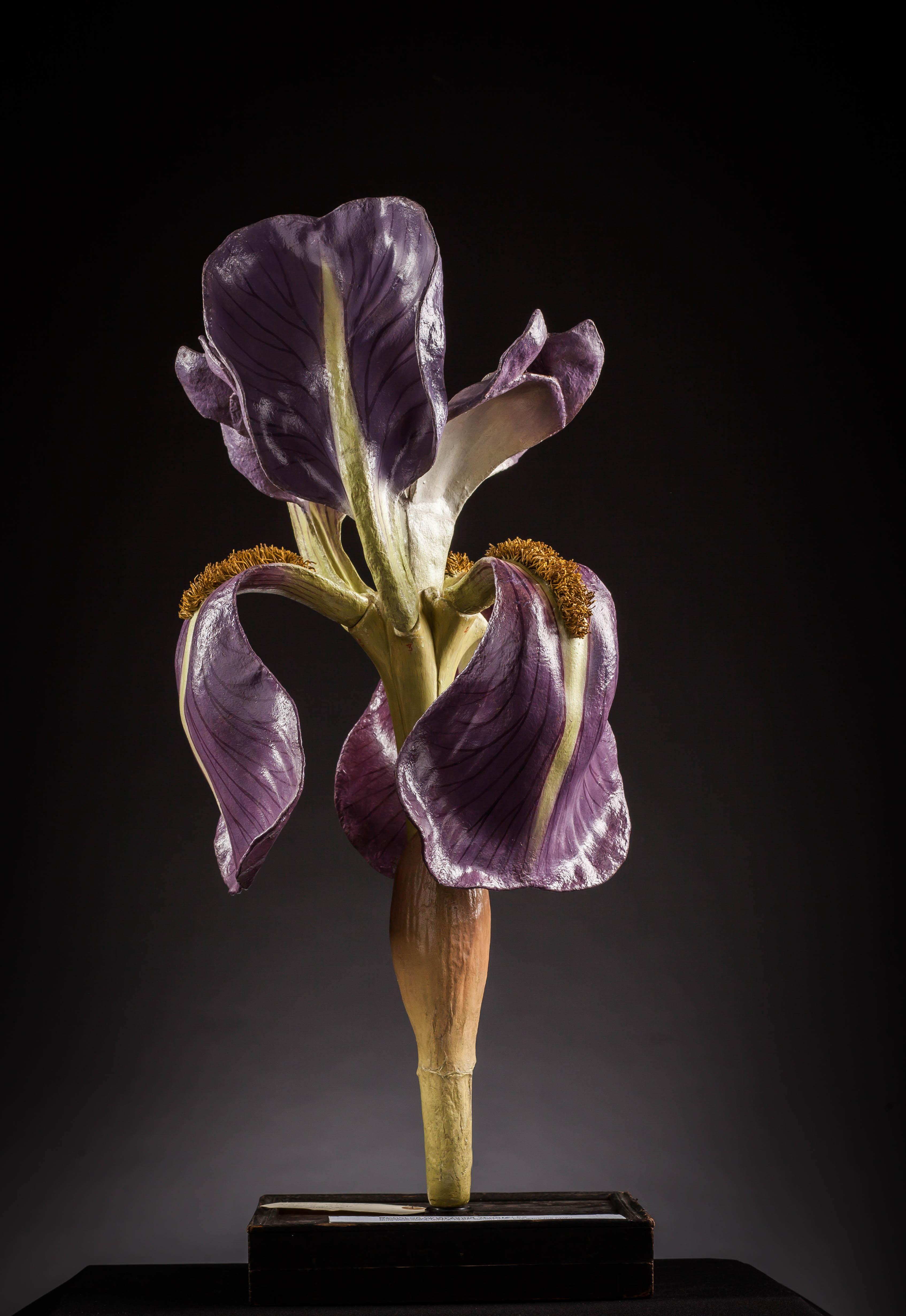 IES_SANISIDRO_MUSEO_Botanica_031