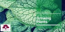 PRIMARIA 2º - CIENCIAS DE LA NATURALEZA - GROWING PLANTS