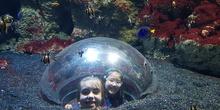 Aquarium Xanadú II 3ºB  7