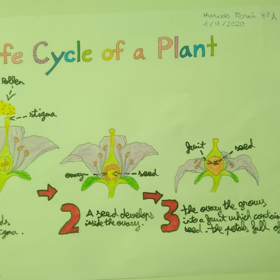 Marcos Perán Life Cycle