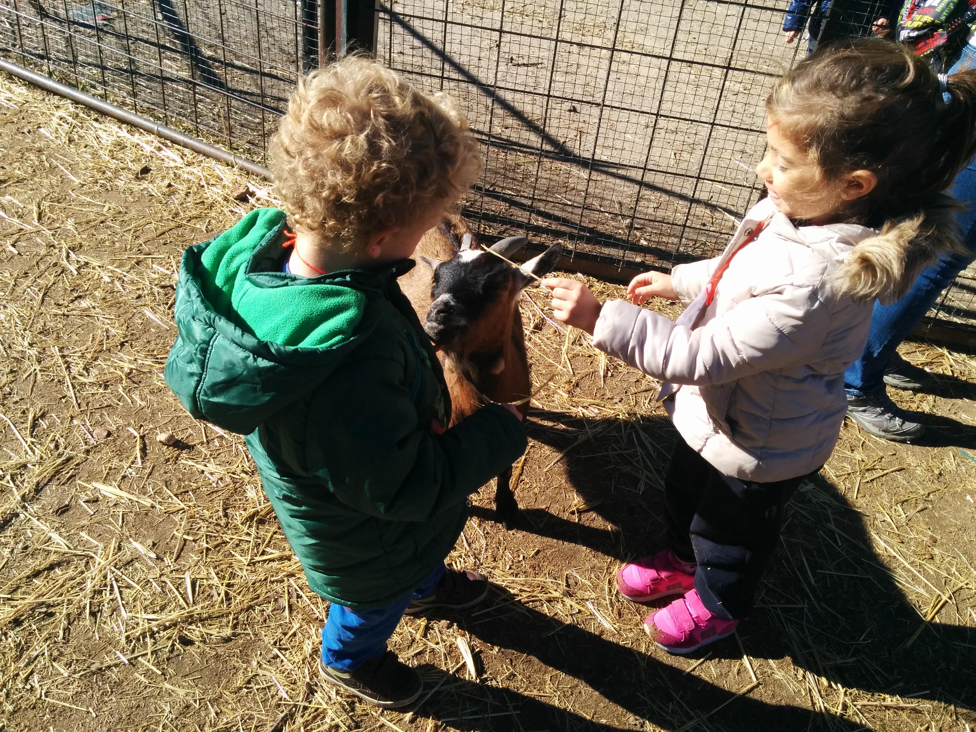 2016_inf 4 años a visita la granja 30