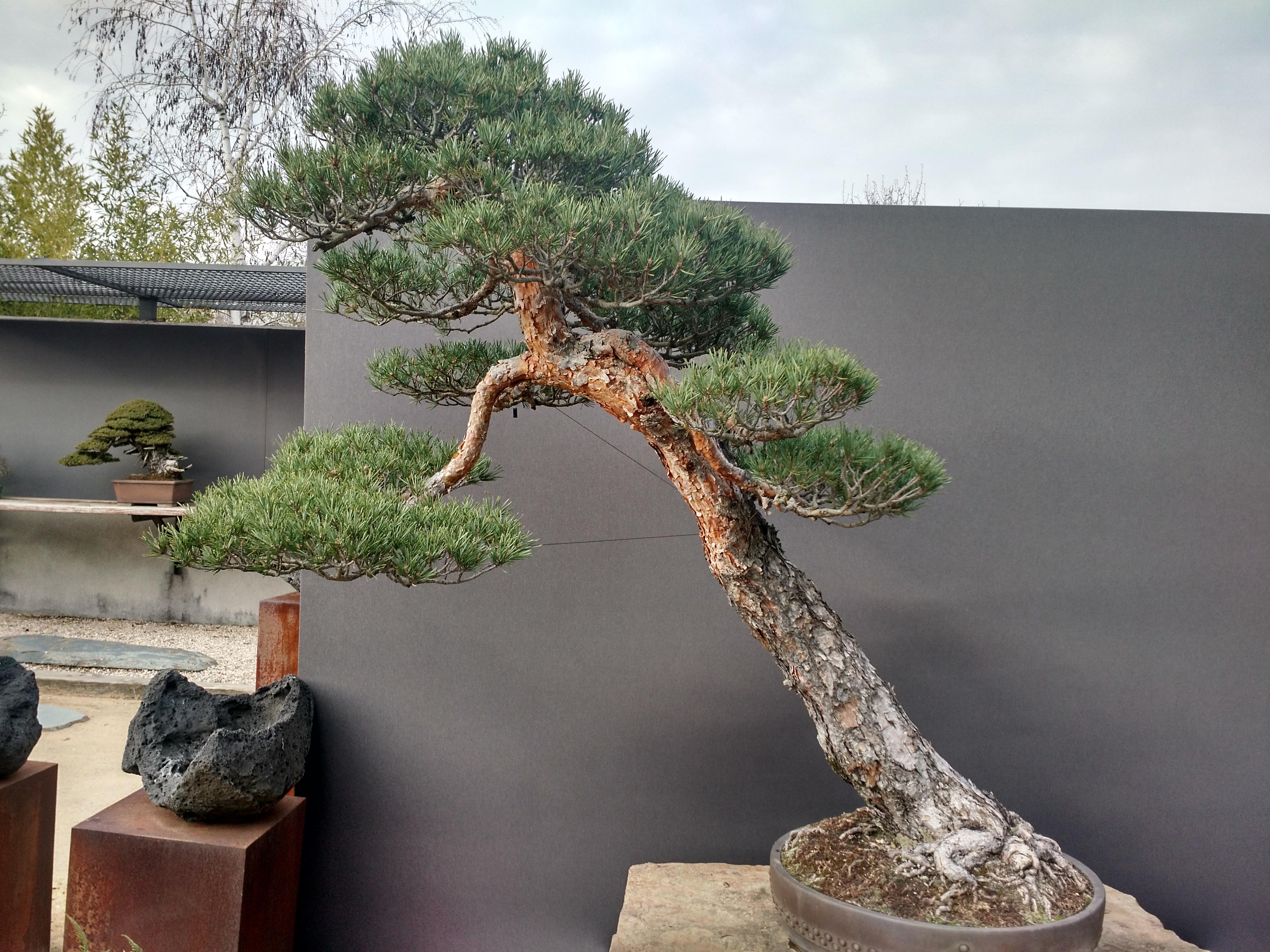 Museo del Bonsai 9