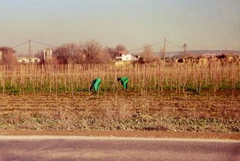 Trabajos del campo