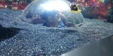 Aquarium Xanadú II 3ºB  21