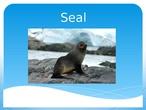 SEA LIFE ANIMALS