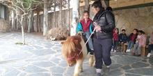 Excursión a la granja (Infantil) 14