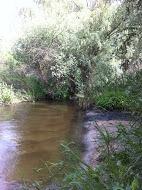 Inspeccion rio guadarrama 4