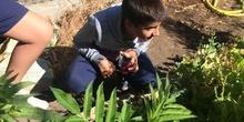 2019_06_11_4º observa insectos en el huerto_CEIP FDLR_Las Rozas 25