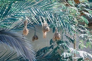 Nidos de pájaros, Namibia