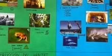 Proyecto animales en extinción 9