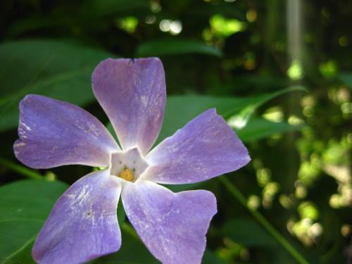 Pentágono floral