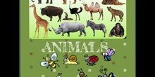 PRIMARIA 1º- NATURAL SCIENCE - ANIMALS - FORMACION