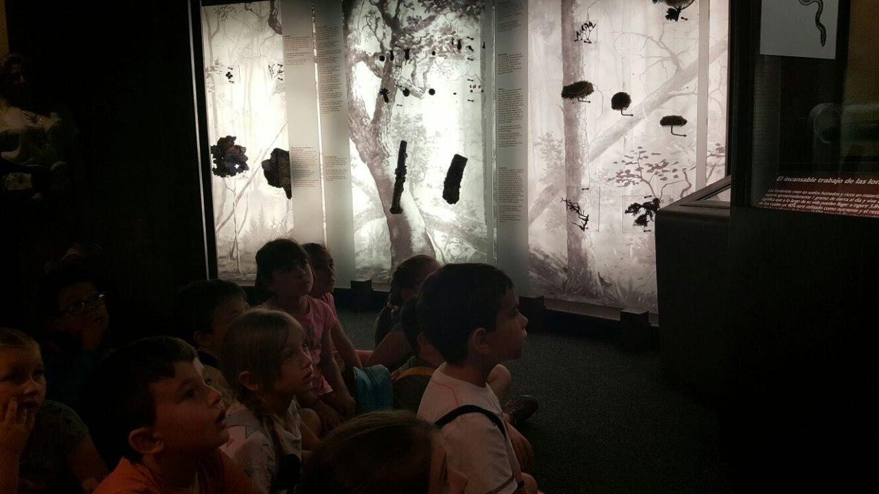 Visita a la exposición El Bosque. 1º 2º Primaria. CEIP Pinocho. 2016/17 23