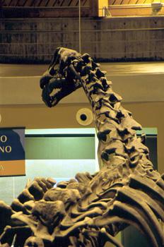 Detalle de Camarasaurus (Dinosauria, Sauropoda), Museo del Jurás